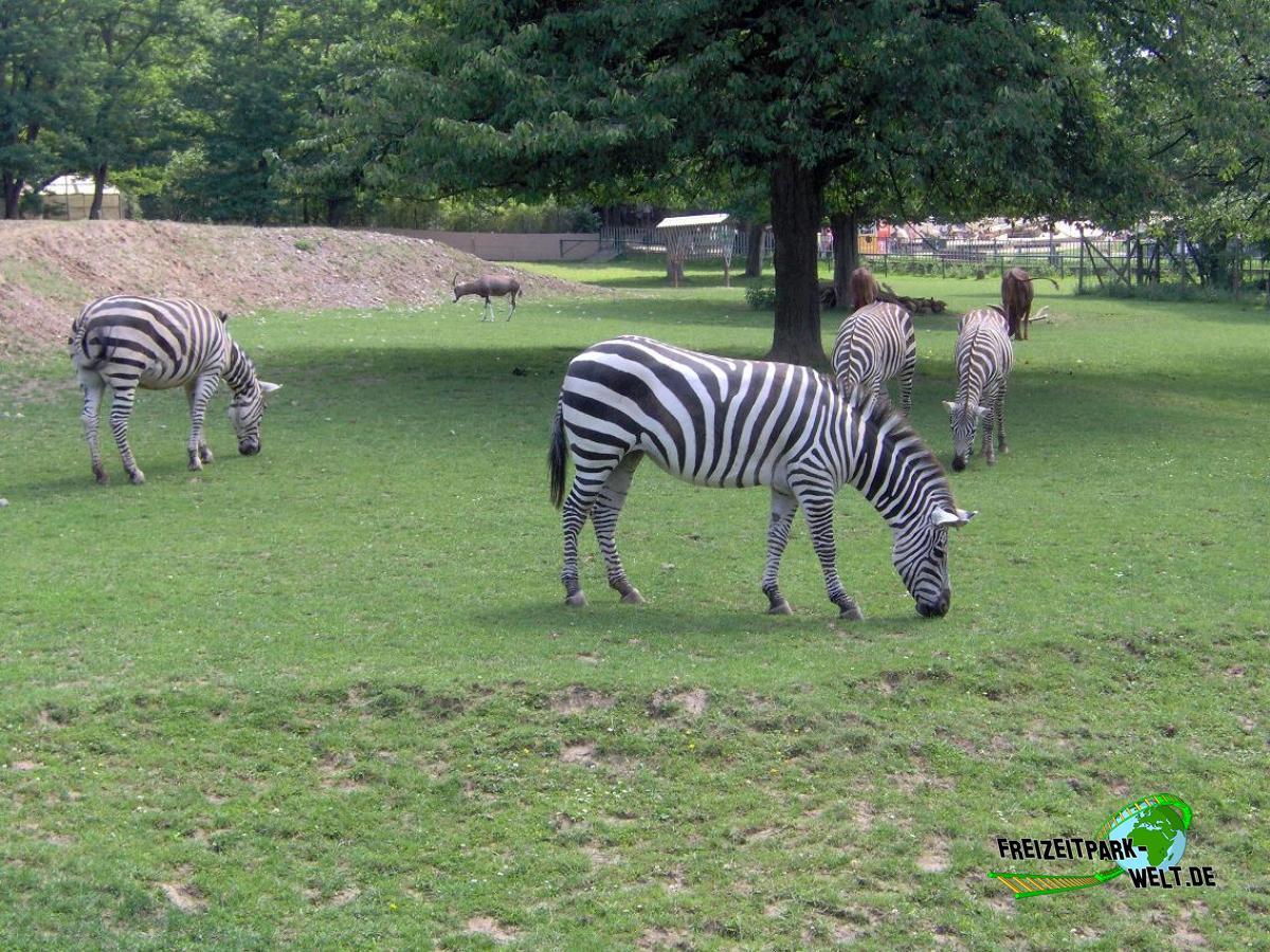 foto galerien zoo neuwied freizeitpark. Black Bedroom Furniture Sets. Home Design Ideas
