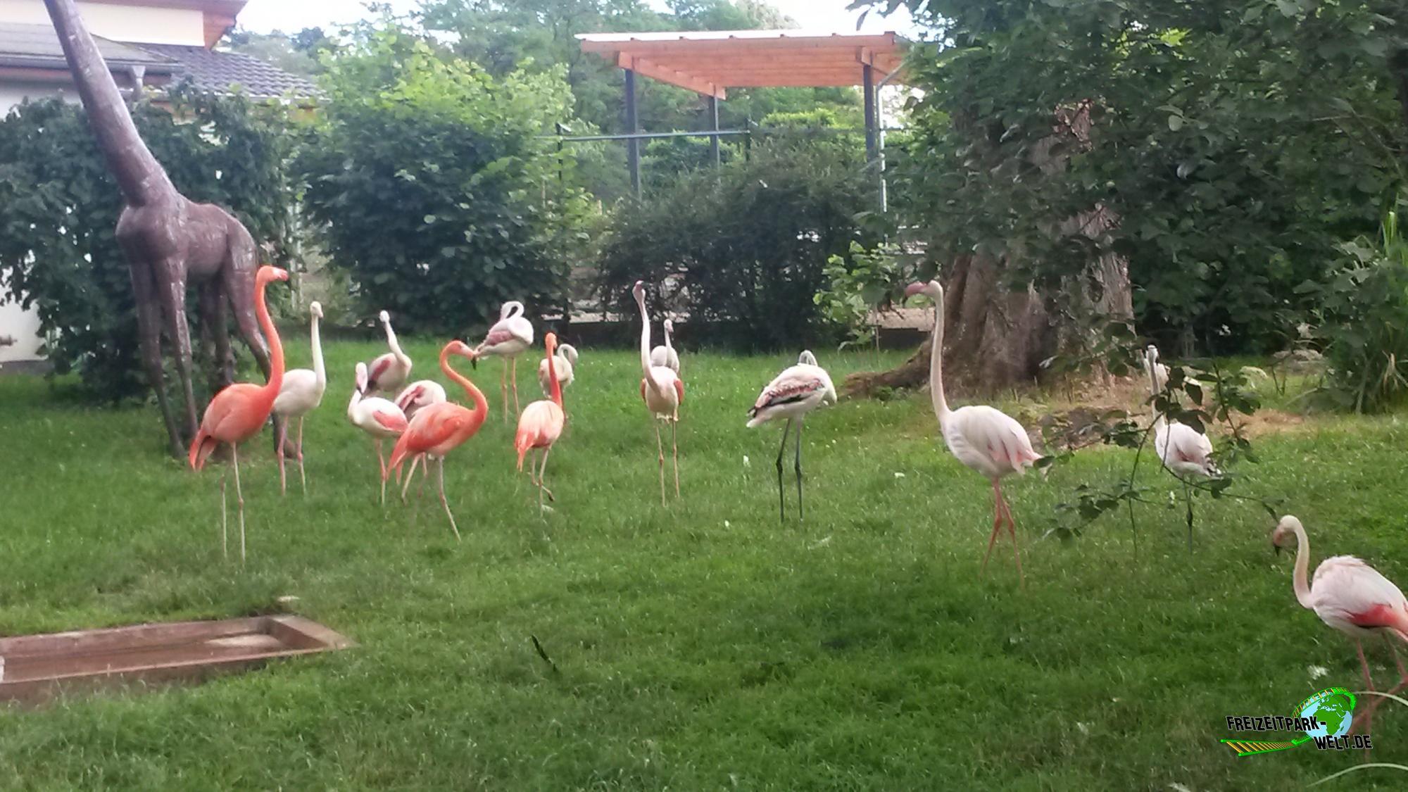 chile flamingo zoo neuwied freizeitpark. Black Bedroom Furniture Sets. Home Design Ideas