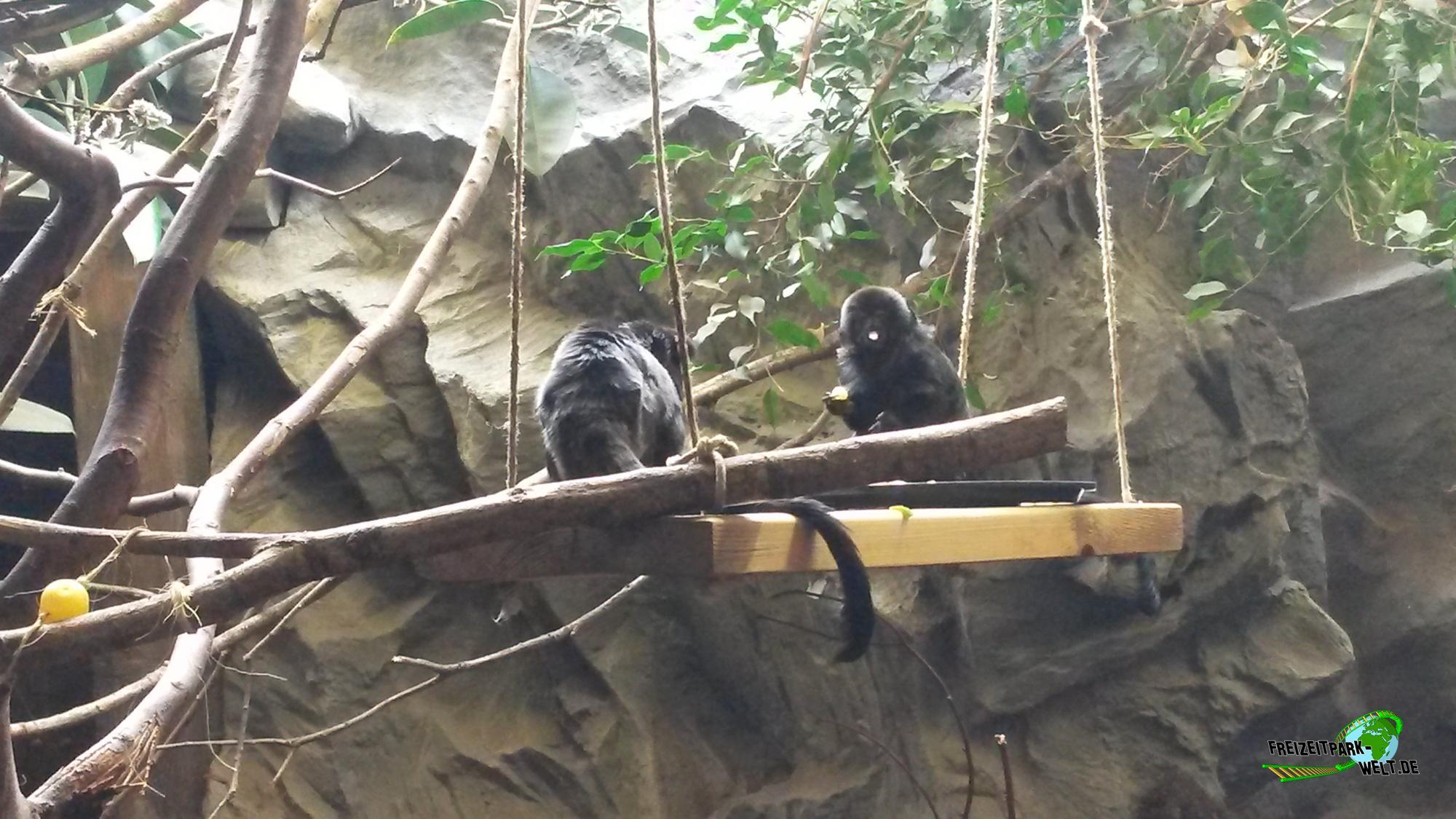 schimpanse zoo neuwied freizeitpark. Black Bedroom Furniture Sets. Home Design Ideas