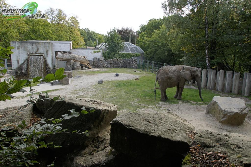 afrikanischer elefant zoo osnabr ck freizeitpark. Black Bedroom Furniture Sets. Home Design Ideas