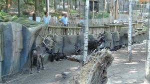 tiere attraktionen im zoo osnabr ck freizeitpark. Black Bedroom Furniture Sets. Home Design Ideas