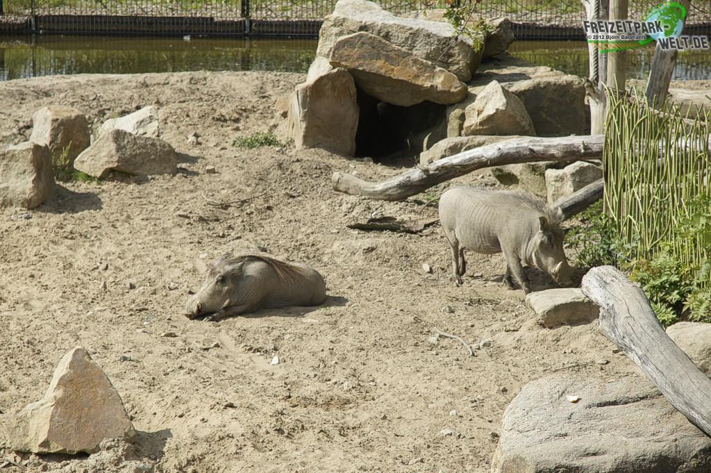 takamanda zoo osnabr ck freizeitpark. Black Bedroom Furniture Sets. Home Design Ideas