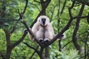 Teaserfoto Zoo Salzburg