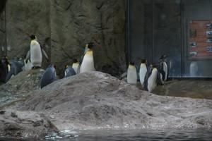 Teaserfoto Zoo Wuppertal