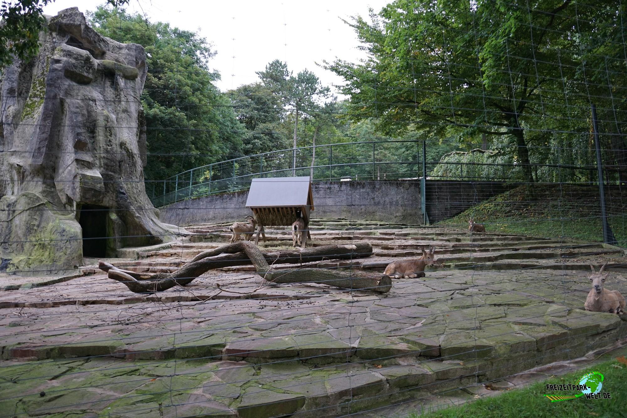 sibirischer steinbock zoo wuppertal freizeitpark. Black Bedroom Furniture Sets. Home Design Ideas