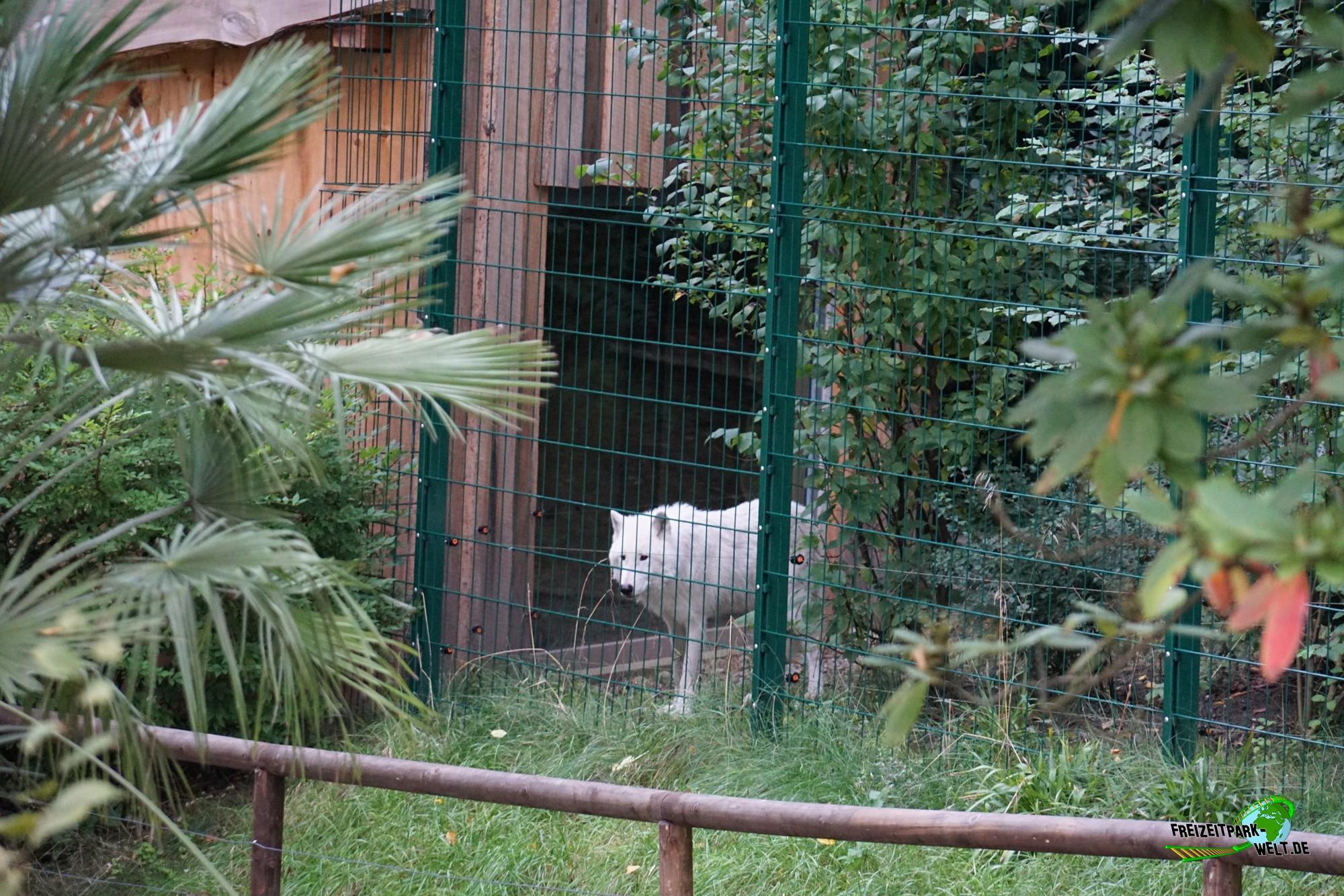 timberwolf zoo wuppertal freizeitpark. Black Bedroom Furniture Sets. Home Design Ideas
