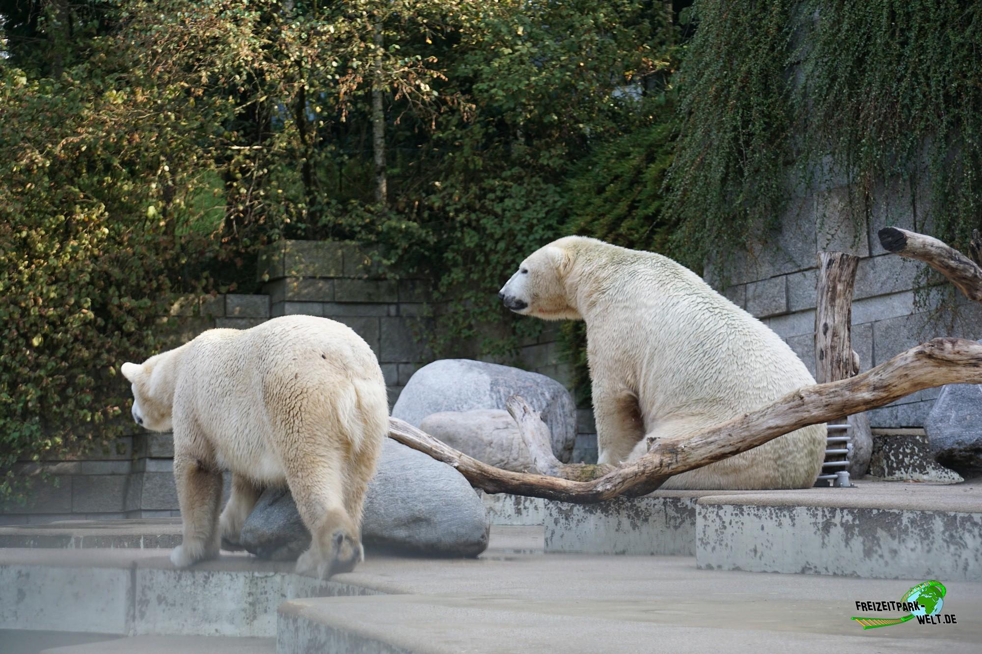 eisb ren zoo wuppertal freizeitpark. Black Bedroom Furniture Sets. Home Design Ideas