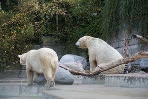 tiere attraktionen im zoo wuppertal freizeitpark. Black Bedroom Furniture Sets. Home Design Ideas