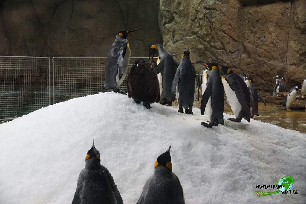 K�nigspinguine - Zoo Wuppertal