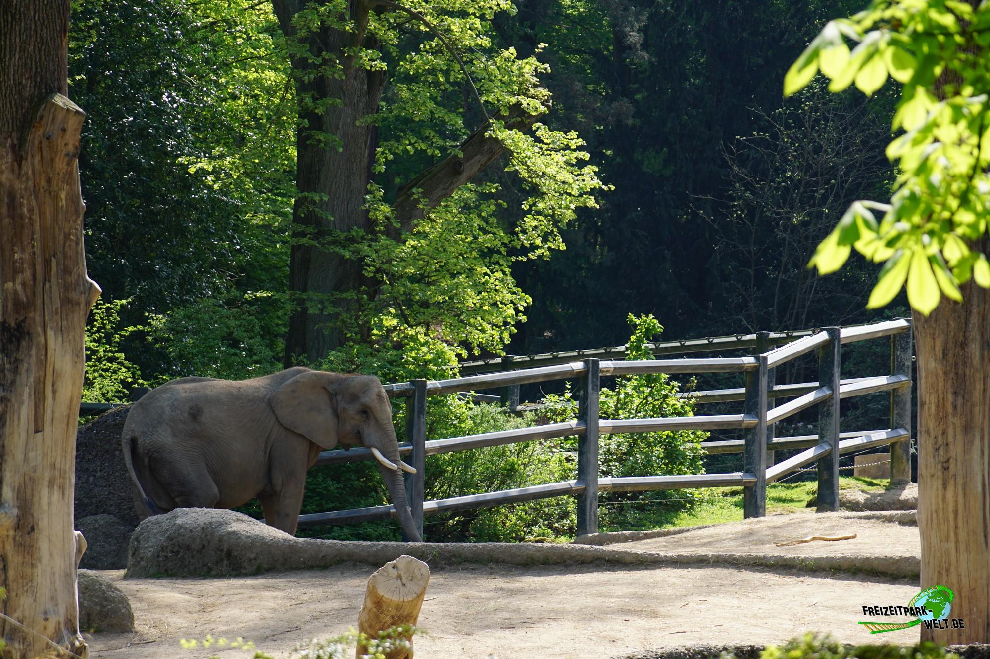 elefanten zoo wuppertal freizeitpark. Black Bedroom Furniture Sets. Home Design Ideas