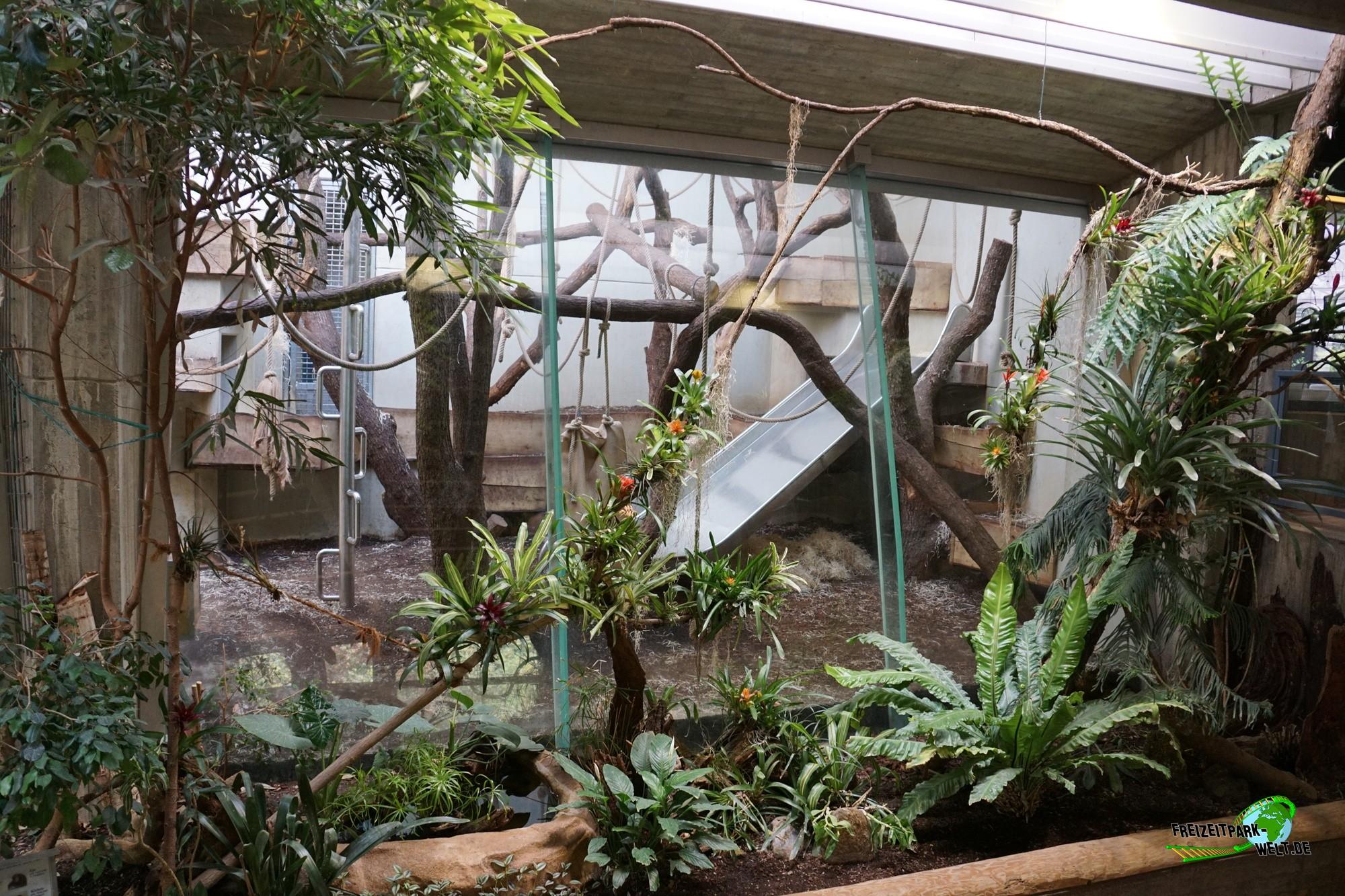 menschenaffen anlage zoo wuppertal freizeitpark. Black Bedroom Furniture Sets. Home Design Ideas