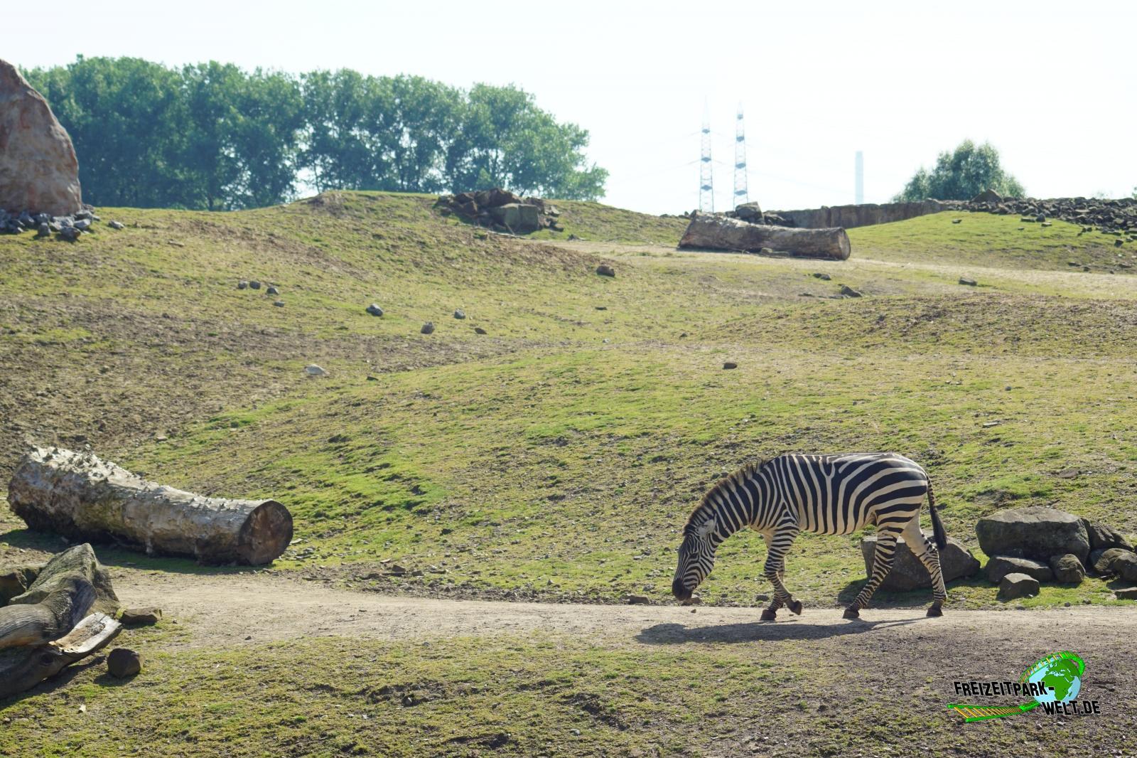 zebras zoom erlebniswelt freizeitpark. Black Bedroom Furniture Sets. Home Design Ideas